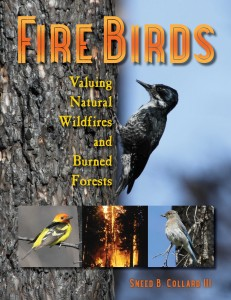 FIRE BIRDS (Bucking Horse Books, January 2015)—a Junior Library Guild Selection.